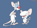 Pinky & The Brain