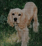 American Cocker Spaniel Crochet Pattern