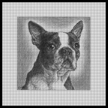 Boston Terrier Crochet Patterns Free Crochet Patterns