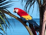 Tropical Parrot Crochet Pattern