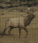 Elk Walking Crochet Pattern