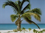 Angel Palm Tree Crochet Pattern