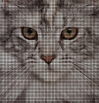 Main Coon Portrait Crochet Pattern