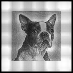 Boston Terrier Black Crochet Pattern