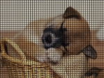 Brand New Puppy Crochet Pattern