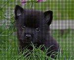 Cute Schipperke Puppy Crochet Pattern