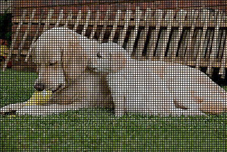 Golden Retrievers Crochet Pattern