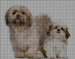 Mother Shih Tzu & Her Pup Crochet Pattern