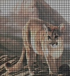 Cougar on the Prowl Crochet Pattern
