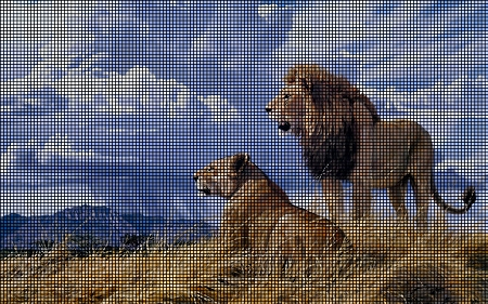 The Lion & Lioness Crochet Pattern